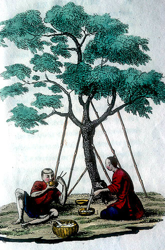 Two Chinese people having a picnic under a tree, Chinese engraving, 1811