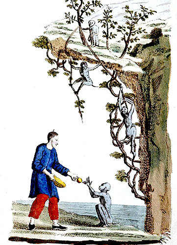 Monkeys in tree, Chinese engraving from La Chine en miniature, 1811, volume II, by Jean Baptiste Joseph Breton de la Martiniere
