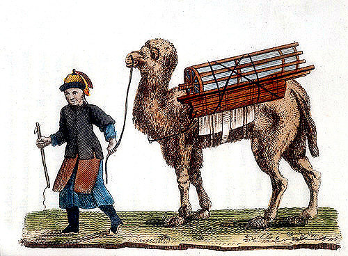 Chinese man leading a camel transporting the Emperor
