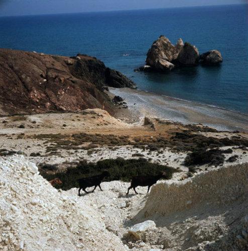 Paphos Cyprus rocks near the bay of Aphrodite