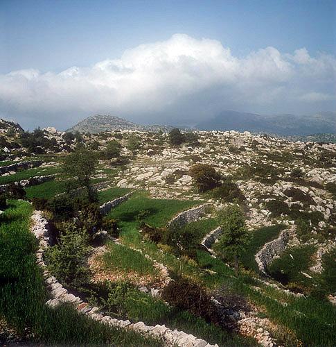 Greece, Arcadia, terraced wheat fields near Bassae