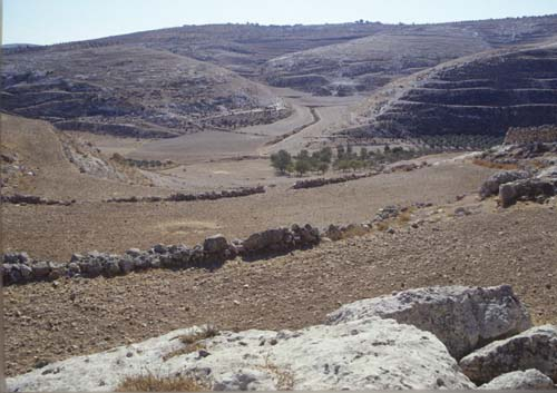 Field of the Shepherds, above cultivated valley, Bethlehem, Israel