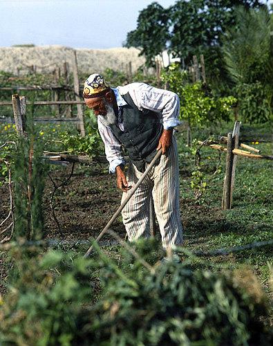 Israel, Jordan valley, Kurdish Jew hoeing in his vineyard, Moshav Yardena, Jordan valley, near Beit She