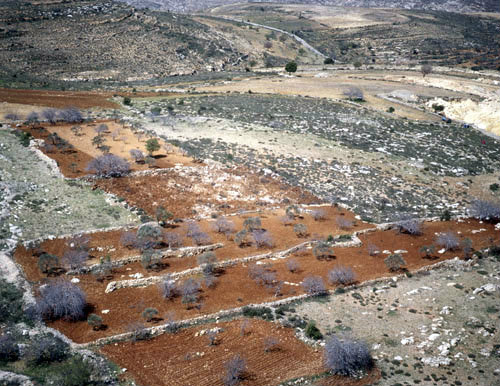 Israel, Samaria, aerial view of terraces between Bethel and Shilo