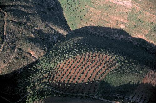 Olive orchard in Jerash, aerial, Jordan