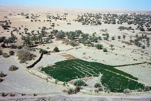 Libya, aerial view of an oasis on the outskirts of Zuila or Zwila