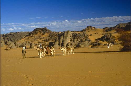 Camel train near Djanet, Sahara, Algeria