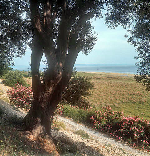 Coast near where St Paul said farewell to the Ephesians, Miletus, Turkey