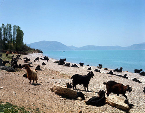 Turkey Pisidia,  goats on shore of Lake Egirdir, formerly Lake Egridir, south of Antioch
