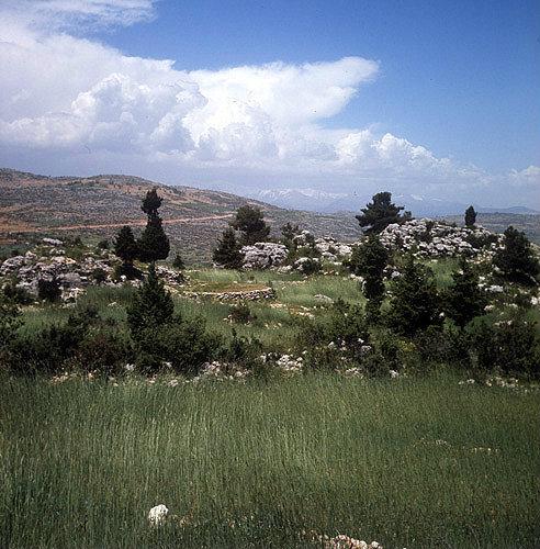 Green wheat fields in the Taurus mountains behind Tarsus, Turkey