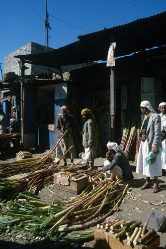 Yemen Al Hammad sugar cane sellers in the Suq