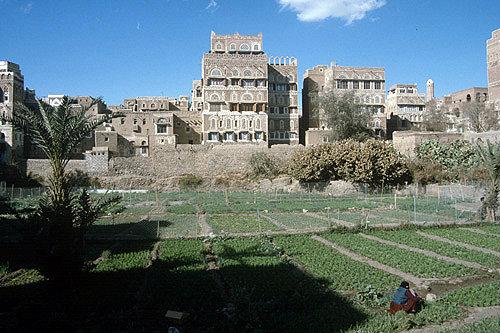Garden in Sana