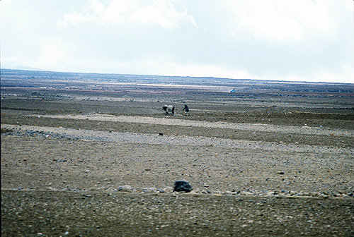 Ploughing with ox, Yemen