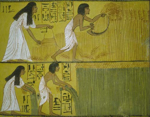 Sennedjem and his wife reaping, tomb painting 1200 BC, Thebes, Egypt