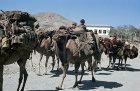 Afghanistan, Hindu Kush, autumn migration of the nomadic Kuchi