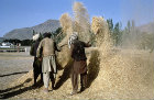 Afghanistan, Kabul, harvesters winnowing