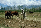 Afghanistan, near Kabul, spring ploughing