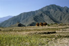 Afghanistan,  the  Upper Kunar Valley