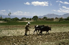 Afghanistan, ploughing in the spring near Kabul
