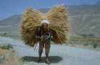 Afghanistan, Andarab valley, farmer carrying heavy load