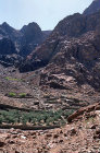 Egypt, Sinai, St Catherine, Wadi Leja, olive grove and Bedouin house