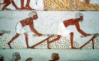 Egypt, Thebes, wall painting of field work in the tomb of Menna, tomb no 69, circa 1422-1411 BC
