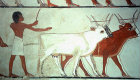 Egypt, Thebes, wall painting of ploughing with cattle, in the tomb of Menna, tomb no 69, circa 1422-1411 BC