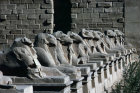 Egypt, Karnak, Temple of Amun, Avenue of ram-headed sphinxes leading to the first pylon