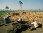 Egypt Arabs casting mud bricks