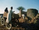 Egypt loading mud bricks onto cart out of kiln