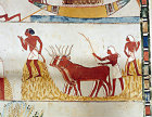 Egypt, Thebes, oxen threshing, wall painting in the tomb of Menna, tomb no 69, circa 1422-1411 BC