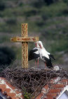 Two storks in nest on church roof by cross, Lesbos, Greece
