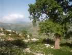 Greece, Arcadia, mountain scenery near Bassae