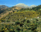 Greece, Arcadia, typical mountain scenery with wild broom