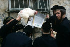 Israel Jerusalem Ultra-Orthodox Jews with live chickens for Kapparot ritual before Day of Atonement