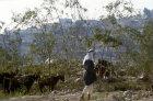 Israel, shepherd and goats north of Bethlehem