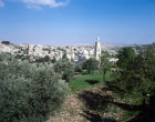 Israel, view of Bethany over olive grove