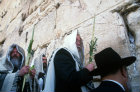 Israel Jerusalem Religious Jews pray with the four species at the Western Wall at the festival of Sukkot
