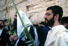 Israel Jerusalem Religious Jews pray with the four species at the Western Wall during the festival of Sukkot
