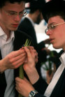 Israel Jerusalem religious Jews inspect a Lulav (palm branch) as they shop for the four species of Sukkot