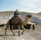 Bedouin on camel near tent in the Judean Hills,  east of Jerusalem, Israel