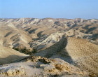 Israel, Oasis in the Judean Desert