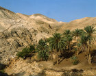 Israel, oasis of palm trees in the Judean Hills east of Jerusalem