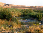 Israel, the river Jordan at sunrise south of the Sea of Galilee, reeds and grasses golden in the sunlight