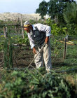 Israel, Jordan valley, Kurdish Jew hoeing in his vineyard, Moshav Yardena, Jordan valley, near Beit She