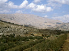 Israel, view of Mount Hermon across fruit trees