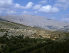 Israel, the Golan Heights view of Mount Hermon across an orchard