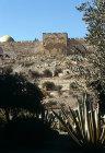 Israel, Jerusalem, the Golden Gate from the Garden of Gethsemane