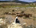 Israel, Arab woman with a herd of goats near Hebron