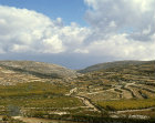 Terraced vineyards near Hebron, Israel